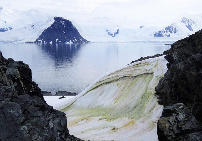 La crisis climática está tiñendo de verde a la Antártida