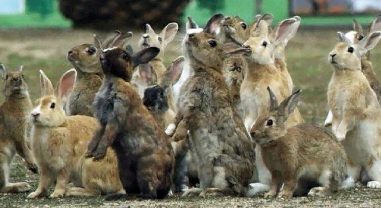 Polémica por la erradicación de conejos silvestres con gas fosfina